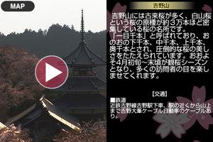 hanami_app_4.jpg