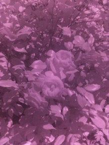 iphone_camera_IR_8.jpg