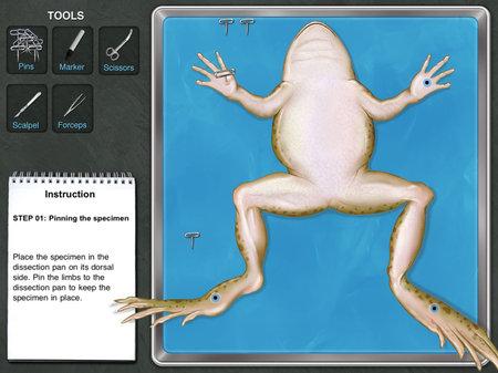 app_edu_frog_2.jpg