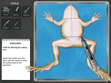 app_edu_frog_3.jpg