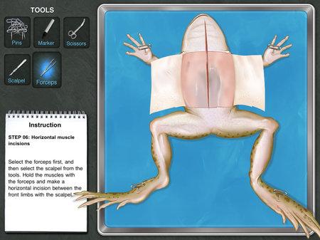 app_edu_frog_4.jpg