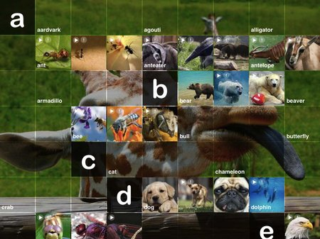app_edu_abc_wildlife_9.jpg