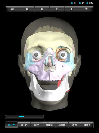 app_med_3d_head_3.jpg