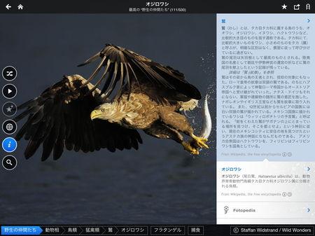 app_travel_fotopedia_wild_friends_4.jpg