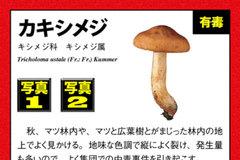 app_ref_kinoko_12.jpg