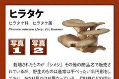 app_ref_kinoko_3.jpg