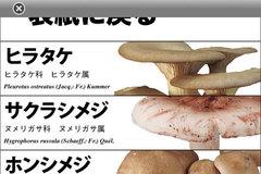 app_ref_kinoko_7.jpg