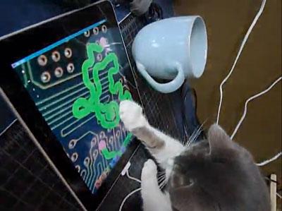 ipad_cat_1.jpg