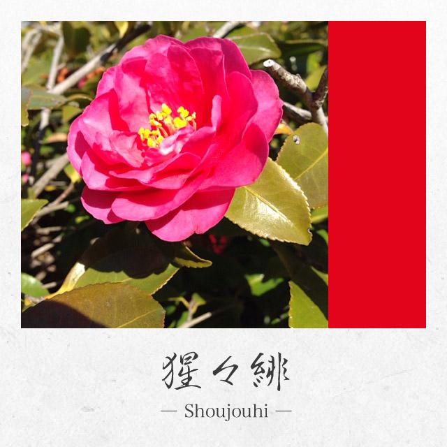 app_photo_kyotocamera_3.jpg
