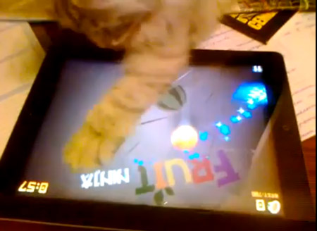 cat_playinig_fruit_ninja_0.jpg
