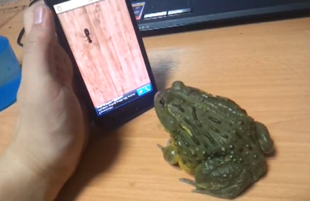iphone_frog_movie_0.jpg